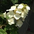 先月末に梅雨入りしましたが、いいお天気が続きますね♪そして緑が濃くなり、きれいなお花がたくさん咲き始めました。ということで、本日は本社&アトリエの花器コレクションをご紹介します☆