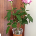こちらは本社サブ受付。ウッド調×ガラスが美しい花器。バラの花がぴったりです☆